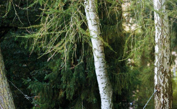 Im Rhythmus Der Natur 01 Bad Kissingen Gmbh