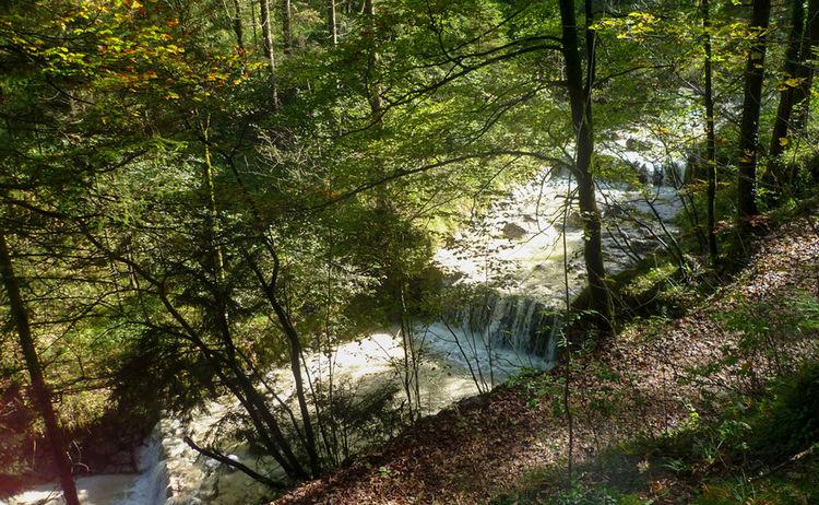 Wald Idyll Pfad Maisrundweg Bayerisch Gmain Salz 4