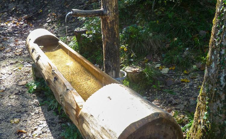 Wald Idyll Pfad Maisrundweg Bayerisch Gmain Salz 1